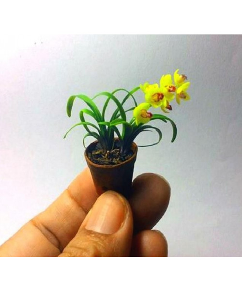Mini Bonsai orchid seeds Indoor Home (Mix Color)
